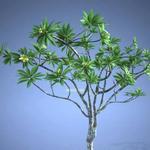 تحميل موديلات  196 Plant نبات