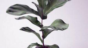 تحميل موديلات  200 Plant نبات
