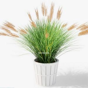 تحميل موديلات  204 Plant نبات