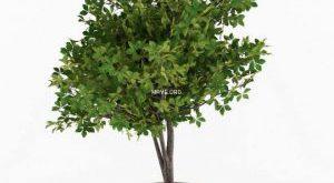 تحميل موديلات  205 Plant نبات