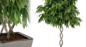 تحميل موديلات  206 Plant نبات