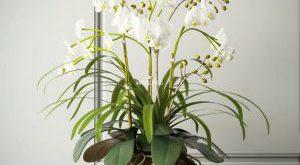 تحميل موديلات  212 Plant نبات