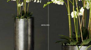 تحميل موديلات  214 Plant نبات