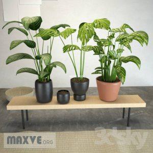 تحميل موديلات  216 Plant نبات