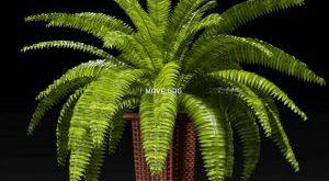 تحميل موديلات  218 Plant نبات