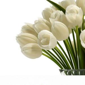 تحميل موديلات  219 Plant نبات