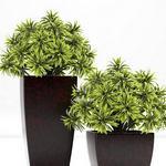 تحميل موديلات  220 Plant نبات