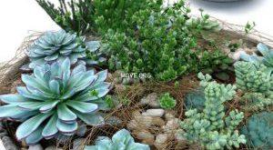 تحميل موديلات  222 Plant نبات