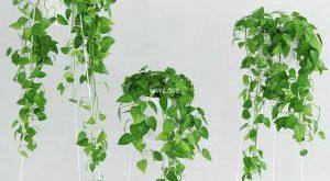 تحميل موديلات  227 Plant نبات