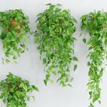 تحميل موديلات  228 Plant نبات