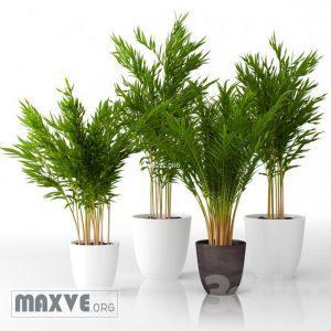 تحميل موديلات  229 Plant نبات