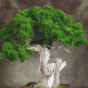 تحميل موديلات  234 Plant نبات