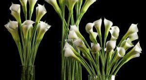 تحميل موديلات  235 Plant نبات