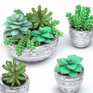 تحميل موديلات  239 Plant نبات