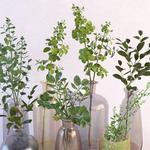 تحميل موديلات  241 Plant نبات