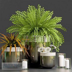 تحميل موديلات  243 Plant نبات