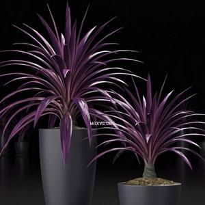 تحميل موديلات  245 Plant نبات