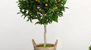 تحميل موديلات  249 Plant نبات