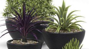 تحميل موديلات  251 Plant نبات