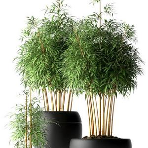 تحميل موديلات  254 Plant نبات