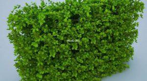 تحميل موديلات  255 Plant نبات