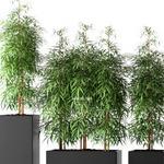تحميل موديلات  262 Plant نبات