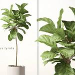تحميل موديلات  263 Plant نبات