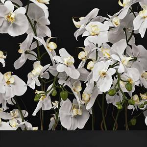 تحميل موديلات  266 Plant نبات