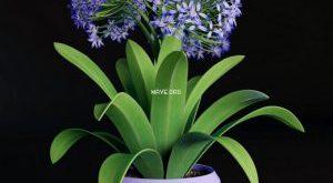 تحميل موديلات  268 Plant نبات