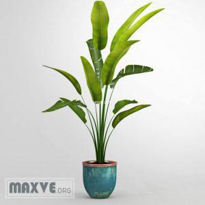 تحميل موديلات  269 Plant نبات