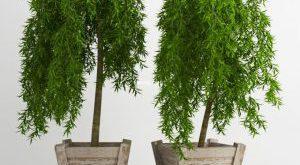 تحميل موديلات  271 Plant نبات