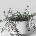 تحميل موديلات  272 Plant نبات
