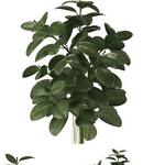 تحميل موديلات  276 Plant نبات