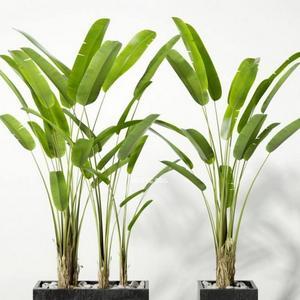 تحميل موديلات  277 Plant نبات