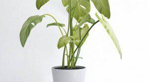 تحميل موديلات  286 Plant نبات