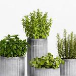 تحميل موديلات  288 Plant نبات