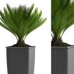 تحميل موديلات  290 Plant نبات