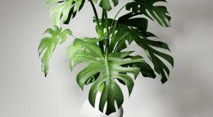 تحميل موديلات  291 Plant نبات
