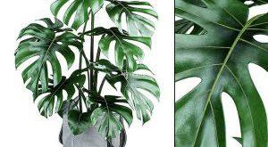 تحميل موديلات  293 Plant نبات