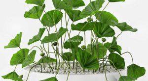 تحميل موديلات  297 Plant نبات