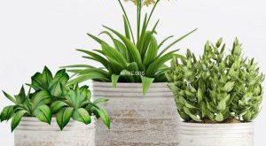تحميل موديلات  298 Plant نبات