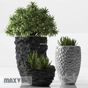 تحميل موديلات  299 Plant نبات