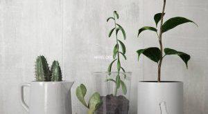 تحميل موديلات  300 Plant نبات