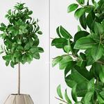 تحميل موديلات  301 Plant نبات