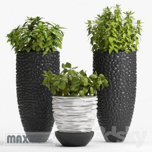 تحميل موديلات  303 Plant نبات