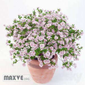 تحميل موديلات  312 Plant نبات