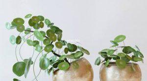 تحميل موديلات  313 Plant نبات