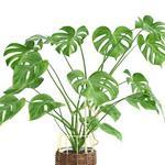 تحميل موديلات  314 Plant نبات