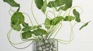 تحميل موديلات  315 Plant نبات