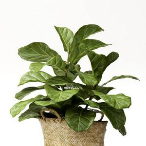 تحميل موديلات  321 Plant نبات